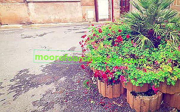 Vrtni travnjaci - cijena, vrste, mogući aranžmani, što odabrati