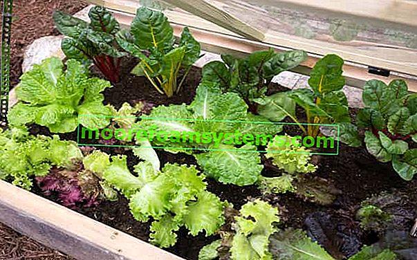 Balkonski staklenici - kako urediti i što se može uzgajati u stakleniku na balkonu?