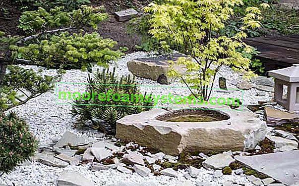 Domaća kamenjarnica korak po korak - kako postaviti kamenjar?
