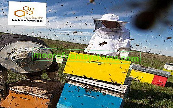 Kako korak po korak postaviti vlastiti pčelinjak? Praktični vodič