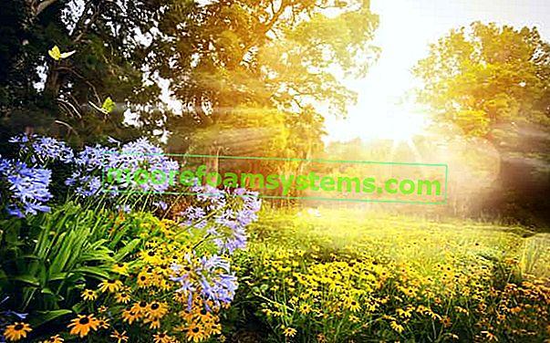 Prekrasni kućni vrtovi - projekti, fotografije, provjerene ideje