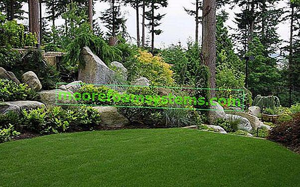 5 najboljih ideja za kamenjar u vrtu i ispred kuće