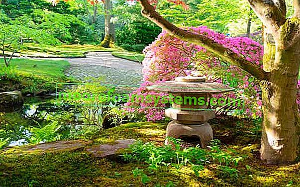 Vaš vlastiti japanski vrt? Pogledajte kako ga staviti korak po korak