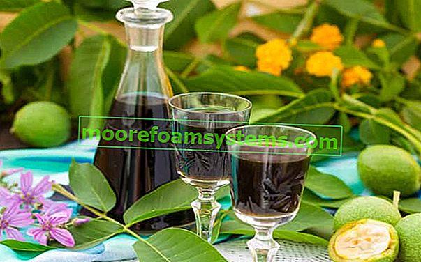 Orašar s duhom - provjereni recepti za tinkturu od orašastih plodova