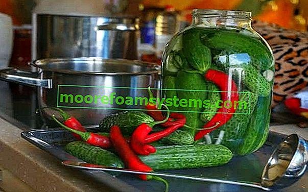 Krastavci s čilijem - provjereni recepti za kisele krastavce u salamuri i s aditivima