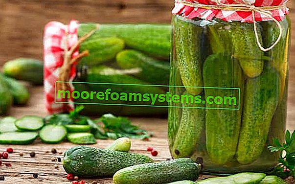Pácolt uborka üvegekbe - bevált receptek a finom pácolt uborkákhoz