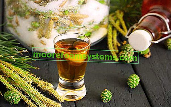 Настойка из сосны - рецепты и приготовление пошагово