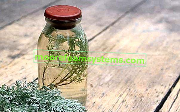 Üröm tinktúra - recept üröm gyógynövény tinktúrájára - cselekvés, tulajdonságok, tippek