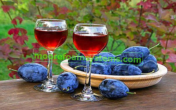 Szilva tinktúra - bevált receptek tinktúrára házi készítésű szeszes italon