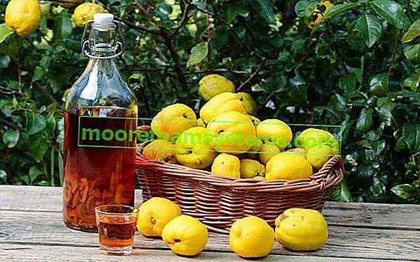 Tinktura od dunja u duhu ili s medom - recept, svojstva