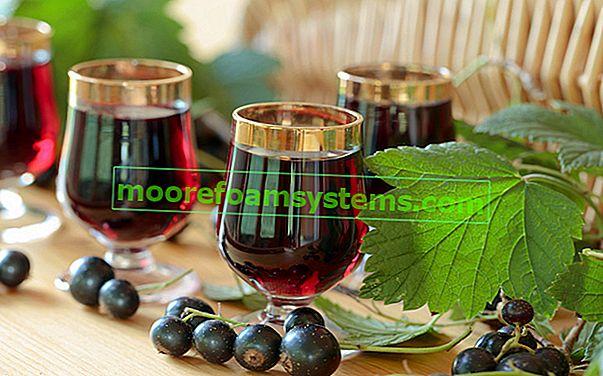 Vino od crnog ribiza - provjereni recepti za domaće vino od ribiza