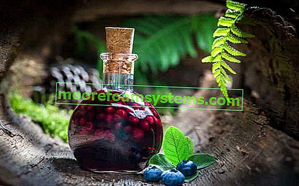 Tinktura borovnice - provjereni recepti korak po korak