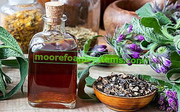 Tinktura gavez - recept i svojstva korijena gavez