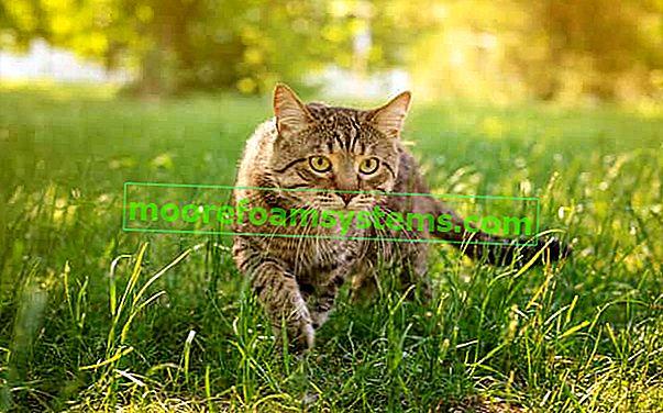 Što i kako uplašiti mačke iz vrta? Praktični savjeti