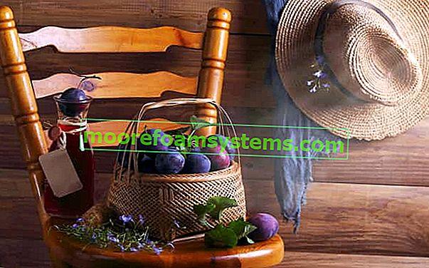 Tinktura od suhe šljive - provjereni recepti za tinkturu na bazi alkohola i votke