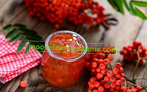Džem od rowanberry - provjereni recepti korak po korak