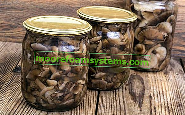 Konzerviranje od gljiva - najbolji recepti za konzerviranje šumskih gljiva