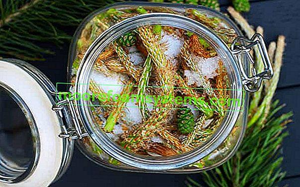 Korak po korak sirup od borovih izbojaka - recept, priprema, svojstva