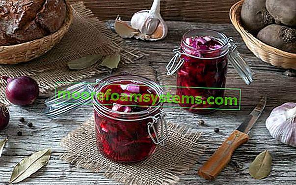 Eingelegte Rote Beete Schritt für Schritt - bewährte Rezepte zum Einlegen von Rüben