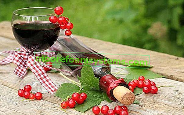 Vino od ribiza - provjereni recepti za vino od crvenog ribiza