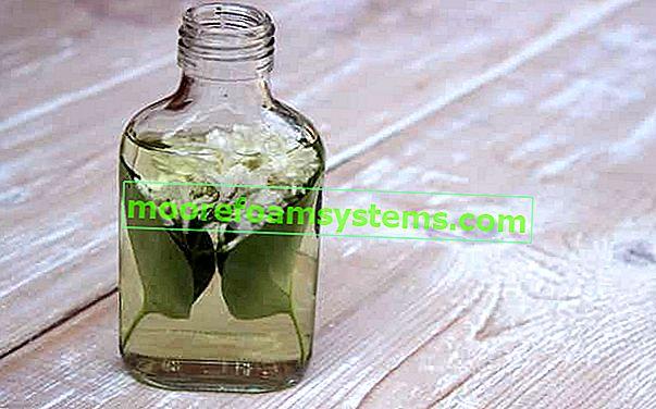 Tinktura cvijeta bazge - provjereni recepti, djelovanje, svojstva, savjeti