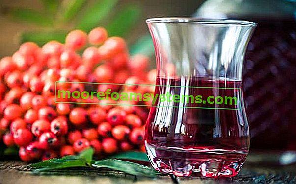 Vino i tinktura od rovana korak po korak - provjereni recepti