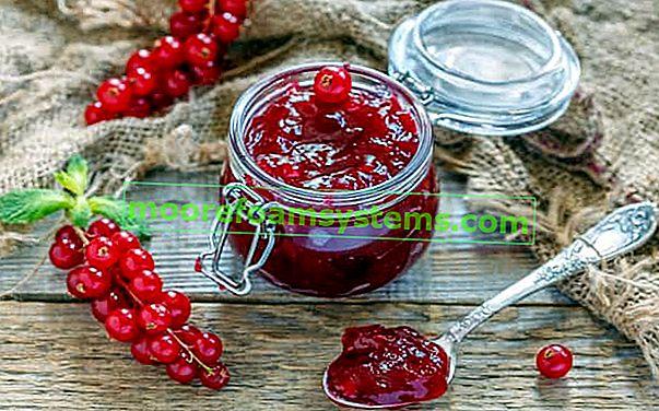 Džem od crvenog ribiza - provjereni korak po korak recepti