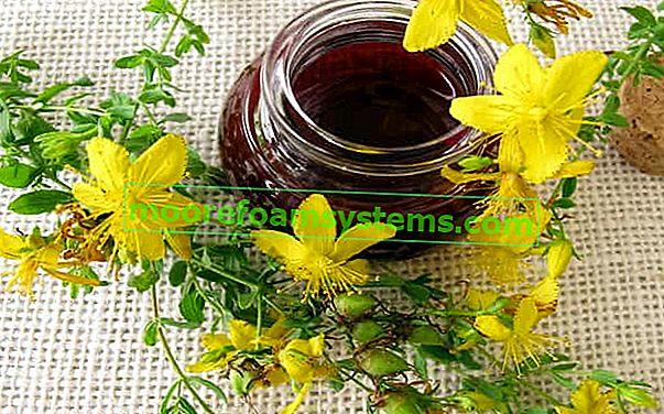 Tinktura i ulje gospine trave - recept i priprema korak po korak