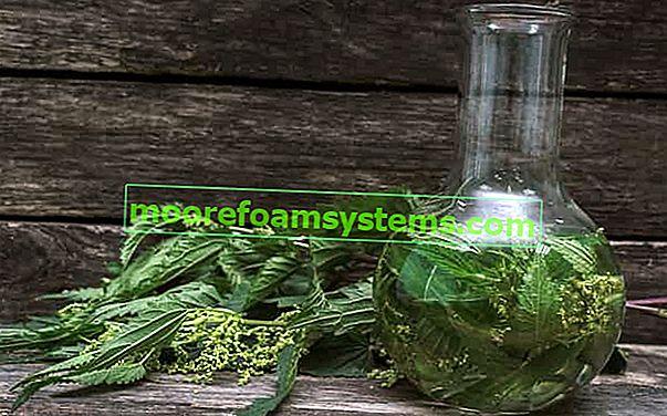 Настойка из крапивы - проверенные рецепты, пошаговое приготовление, применение, свойства