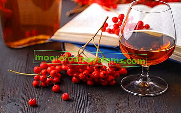 Vino i sok od rowan - korak po korak recepti, primjena, ljekovita svojstva