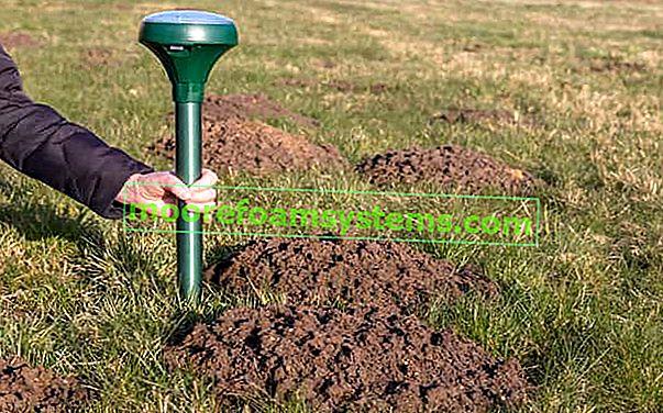 Jak se zbavit krtka? Osvědčené metody pro krtka v zahradě