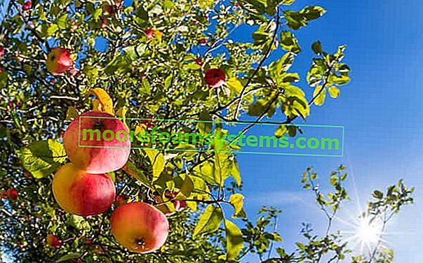 A legjobb almafajták Lengyelországban - áttekintés a legnépszerűbb fajokról