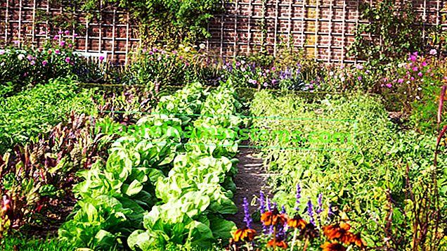 Sousedství zeleniny v zahradě - co s tím? Průvodce