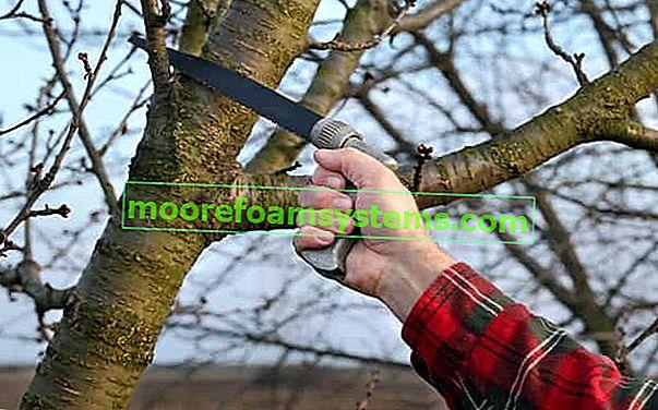 Prořezávání ovocných stromů - kdy a jak řezat stromy?