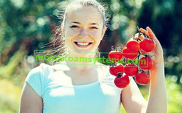 Sadnja i uzgoj rajčica - ono što trebate znati