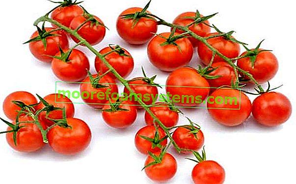 Kako samostalno uzgajati cherry rajčice kod kuće ili na balkonu?