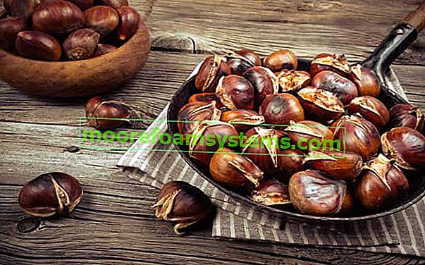 Jestivi kesten - sadnja i uzgoj u Poljskoj, zahtjevi, savjeti, upotreba u kuhinji