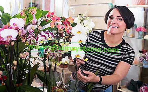 Supstrat za orhideje - koje tlo je najbolje odabrati za posudu?