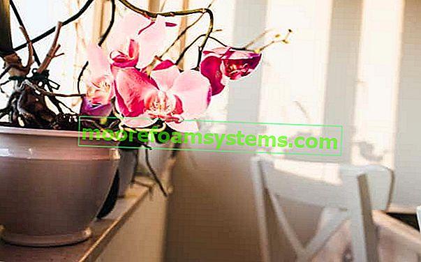 Koje lonce s orhidejama odabrati? Praktični vodič