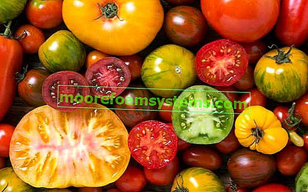 Je li rajčica voće ili povrće? Mi objašnjavamo