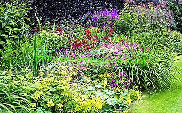 Višegodišnje višegodišnje biljke - najpopularnije sorte dugog cvjetanja za vrt