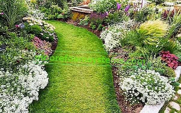 Zahradní trvalky - 10 z nejkrásnějších vytrvalých květin