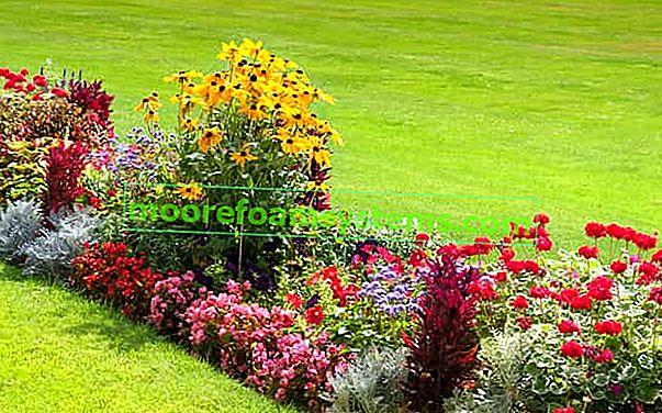 Trajnice koje cvjetaju ljeti - što odabrati za vrt?