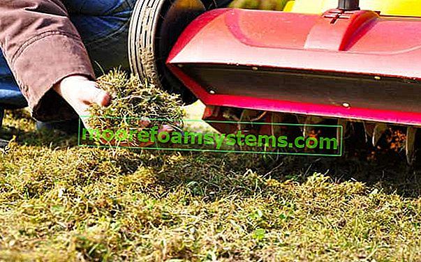 Suzbijanje mahovine na travnjaku i na kaldrmi - provjerene metode
