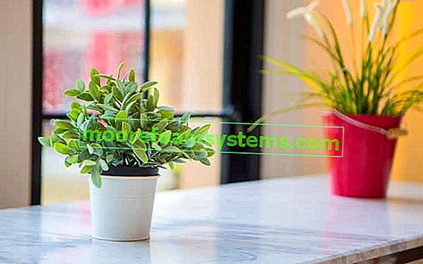 Najbolje sobno cvijeće za dom - svi ga mogu uzgajati