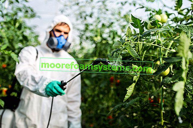 Koračno prskanje rajčice - datumi, preporučeni pripravci, mišljenja