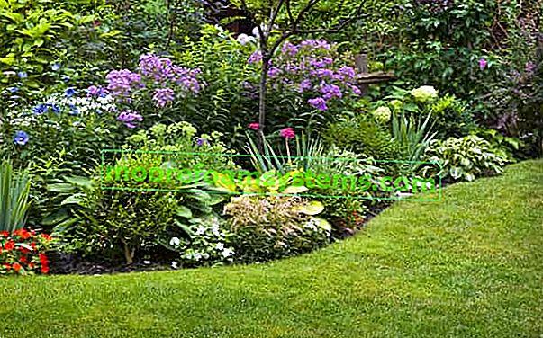 10 z nejkrásnějších jarních a letních kvetoucích keřů na zahradě